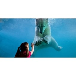 Point Defiance Zoo & Aquarium Uses IBM Big Data Analytics to Better Engage the Millennial Visitor