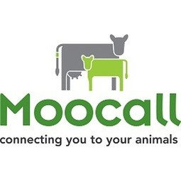 Connecting Cows to Save the Lives of Calves with MooCall